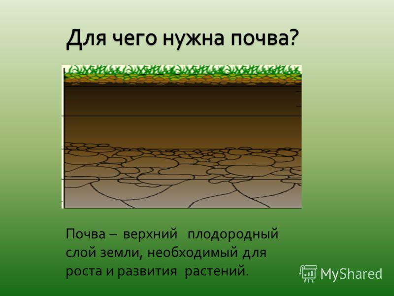 Почва – верхний плодородный слой земли, необходимый для роста и развития растений.