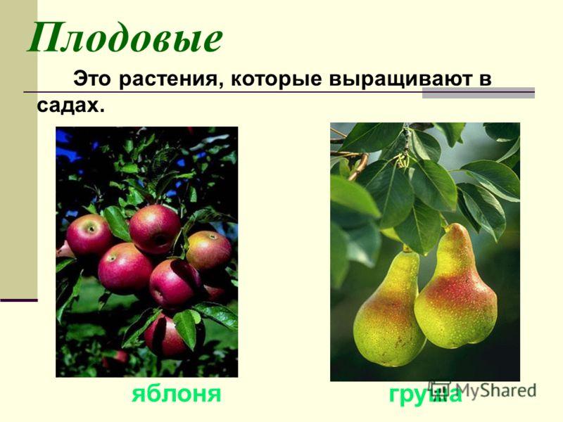 Культурные растения Окружающий мир 2 класс