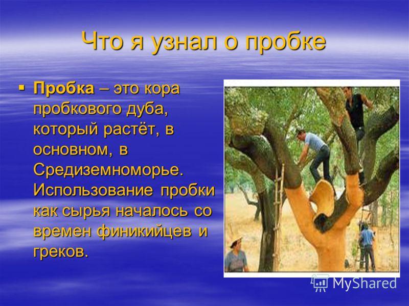 Что я узнал о пробке Пробка – это кора пробкового дуба, который растёт, в основном, в Средиземноморье. Использование пробки как сырья началось со времен финикийцев и греков. Пробка – это кора пробкового дуба, который растёт, в основном, в Средиземном