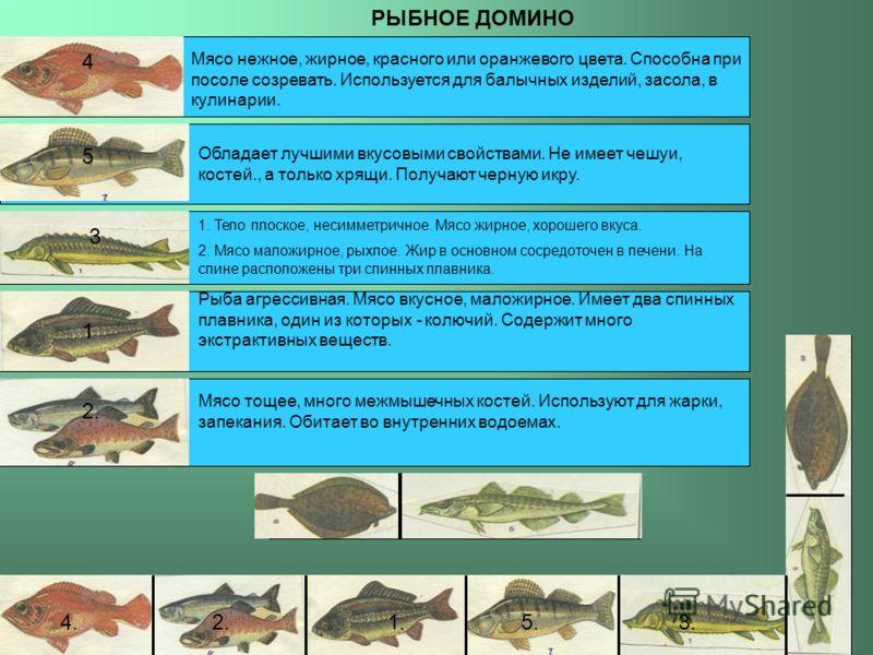 РЫБНОЕ ДОМИНО 1 Рыба агрессивная. Мясо вкусное, маложирное. Имеет два спинных плавника, один из которых - колючий. Содержит много экстрактивных веществ. 2. Мясо тощее, много межмышечных костей. Используют для жарки, запекания. Обитает во внутренних в