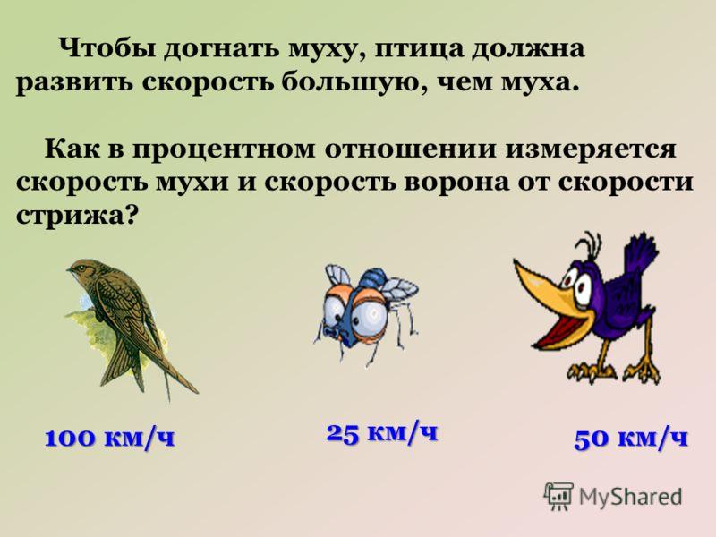 Чтобы догнать муху, птица должна развить скорость большую, чем муха. Как в процентном отношении измеряется скорость мухи и скорость ворона от скорости стрижа? 100 км/ч 25 км/ч 50 км/ч