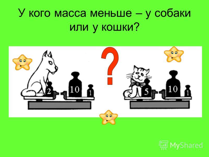 У кого масса меньше – у собаки или у кошки?