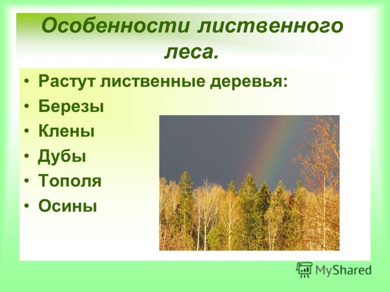 Особенности лиственного леса. Растут лиственные деревья: Березы Клены Дубы Тополя Осины
