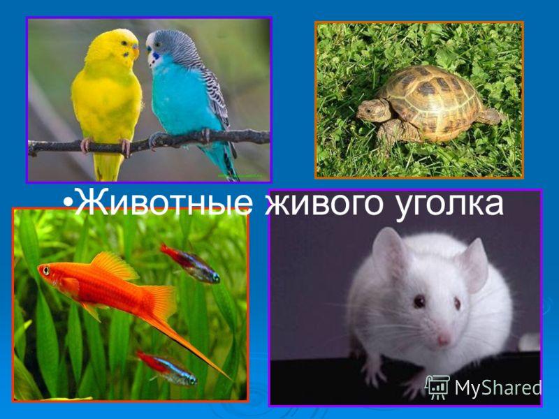 Животные живого уголка