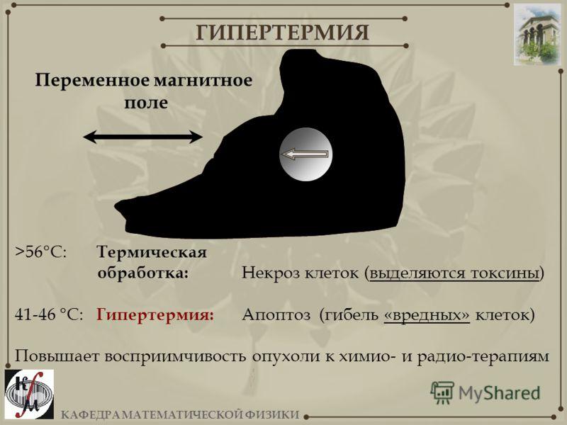 КАФЕДРА МАТЕМАТИЧЕСКОЙ ФИЗИКИ ГИПЕРТЕРМИЯ >56°C: Термическая обработка: Некроз клеток (выделяются токсины) 41-46 °C: Гипертермия: Апоптоз (гибель «вредных» клеток) Повышает восприимчивость опухоли к химио- и радио-терапиям опухоль Переменное магнитно