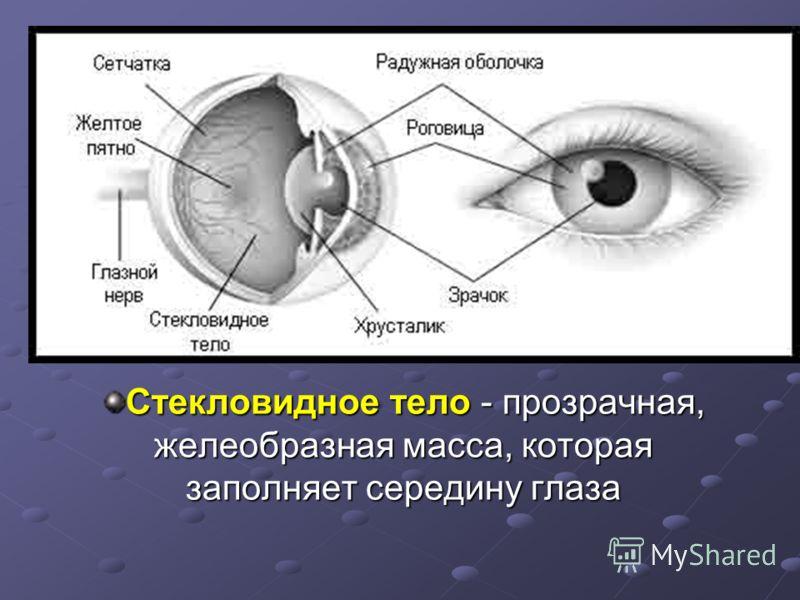 Стекловидное тело - прозрачная, желеобразная масса, которая заполняет середину глаза