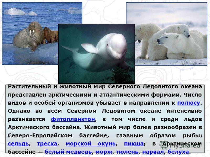 Растительный и животный мир Северного Ледовитого океана представлен арктическими и атлантическими формами. Число видов и особей организмов убывает в направлении к полюсу. Однако во всём Северном Ледовитом океане интенсивно развивается фитопланктон, в
