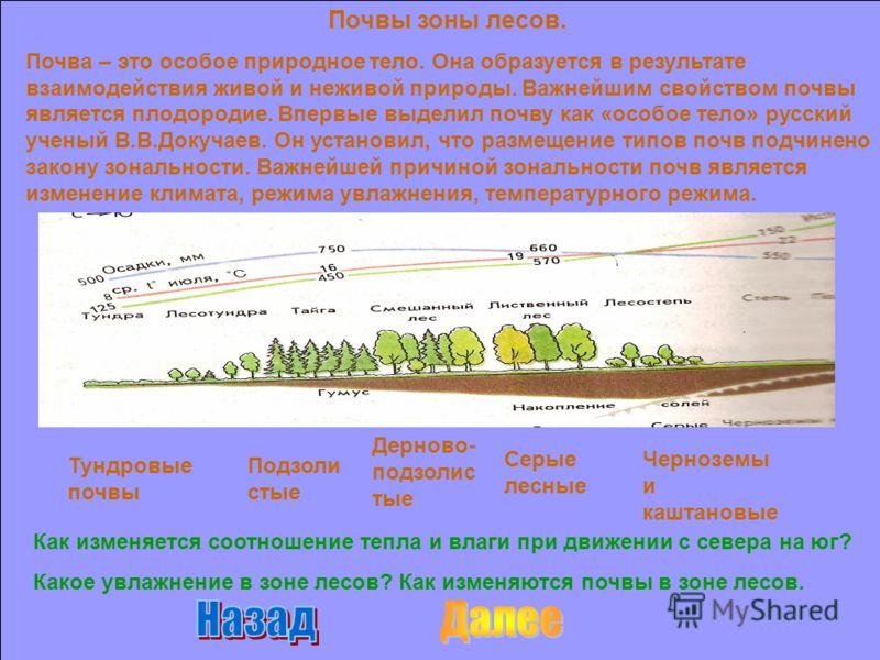 Почвы зоны лесов. Почва – это особое природное тело. Она образуется в результате взаимодействия живой и неживой природы. Важнейшим свойством почвы является плодородие. Впервые выделил почву как «особое тело» русский ученый В.В.Докучаев. Он установил,