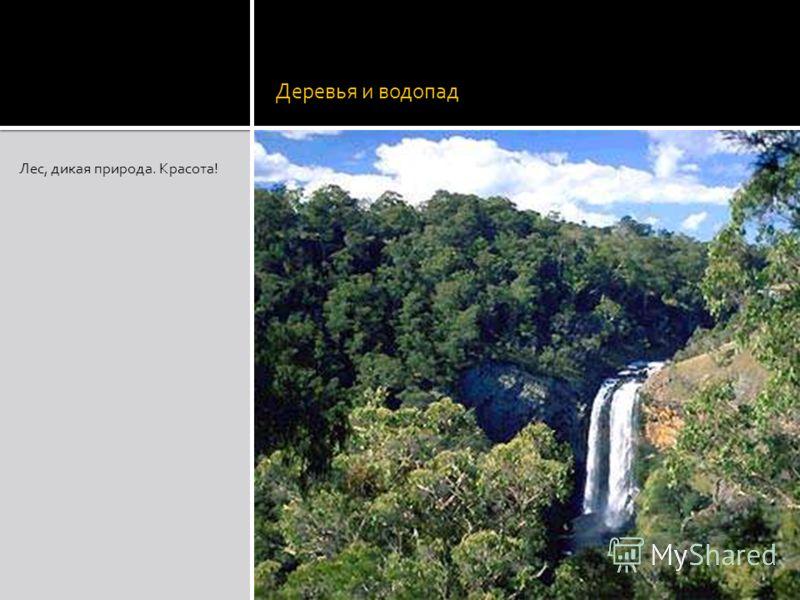 Деревья и водопад Лес, дикая природа. Красота!