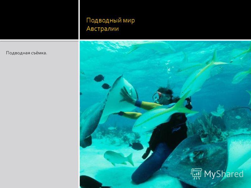 Подводный мир Австралии Подводная съёмка.