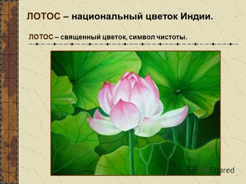 ЛОТОС – национальный цветок Индии. ЛОТОС – священный цветок, символ чистоты.