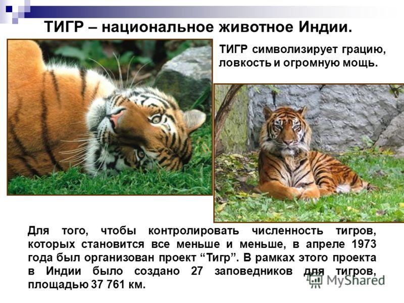 Для того, чтобы контролировать численность тигров, которых становится все меньше и меньше, в апреле 1973 года был организован проект Тигр. В рамках этого проекта в Индии было создано 27 заповедников для тигров, площадью 37 761 км. ТИГР – национальное