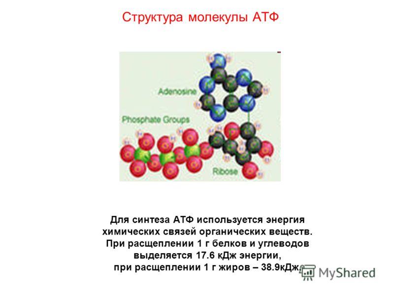 Структура молекулы АТФ Для синтеза АТФ используется энергия химических связей органических веществ. При расщеплении 1 г белков и углеводов выделяется 17.6 кДж энергии, при расщеплении 1 г жиров – 38.9кДж.