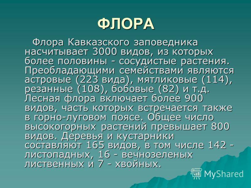 ФЛОРА Флора Кавказского заповедника насчитывает 3000 видов, из которых более половины - сосудистые растения. Преобладающими семействами являются астровые (223 вида), мятликовые (114), резанные (108), бобовые (82) и т.д. Лесная флора включает более 90