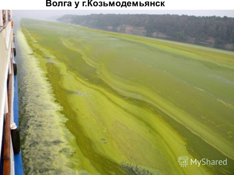 Волга у г.Козьмодемьянск