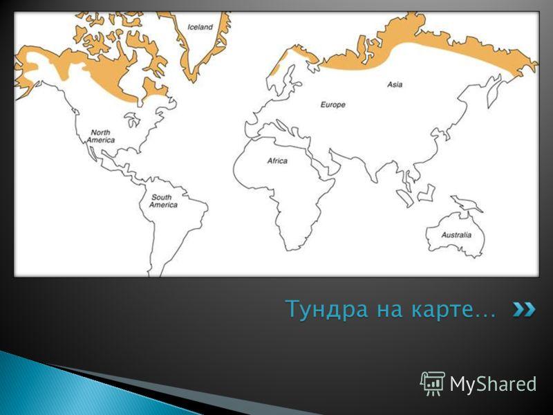 Тундра на карте…