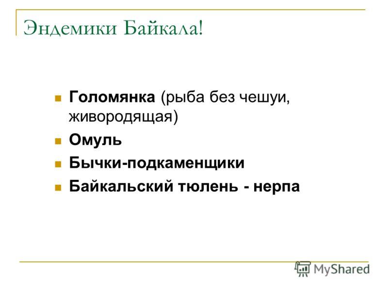 Эндемики Байкала! Голомянка (рыба без чешуи, живородящая) Омуль Бычки-подкаменщики Байкальский тюлень - нерпа