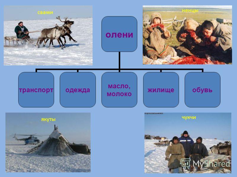 олени транспортодежда масло, молоко жилищеобувь ненцы якуты чукчи саами
