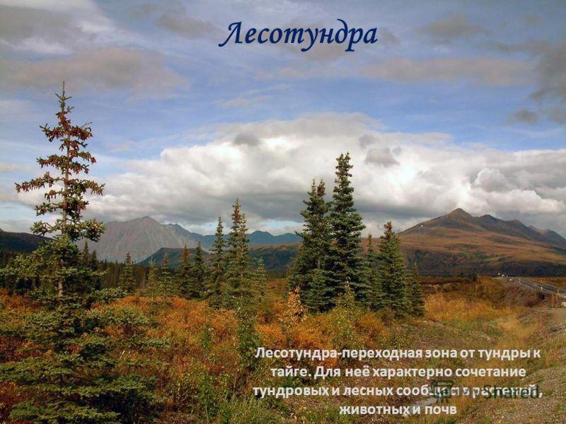 Лесотундра Лесотундра-переходная зона от тундры к тайге. Для неё характерно сочетание тундровых и лесных сообществ растений, животных и почв