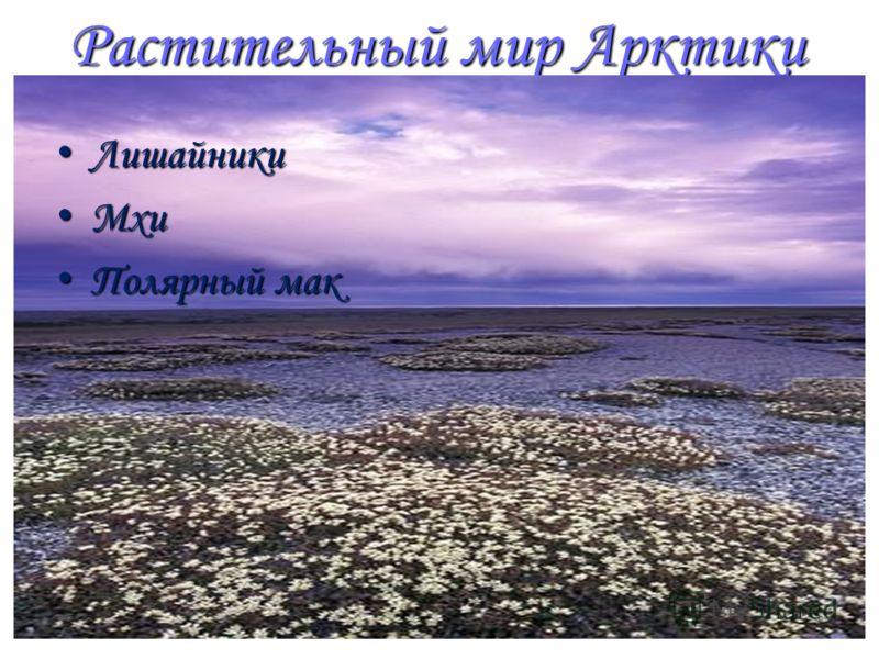 Растительный мир Арктики Лишайники Лишайники Мхи Мхи Полярный мак Полярный мак