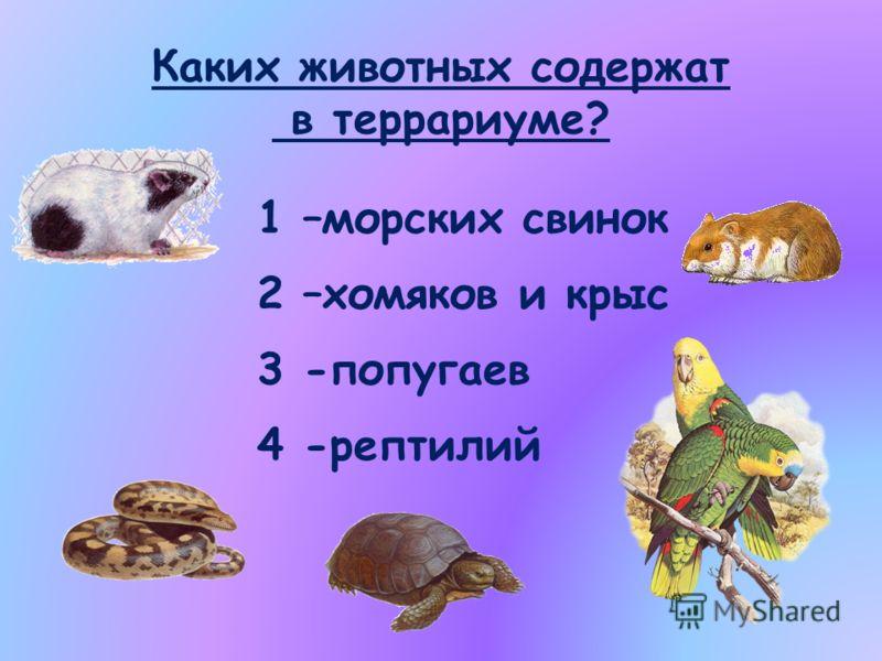 Каких животных содержат в террариуме? 1 –морских свинок 2 –хомяков и крыс 3 -попугаев 4 -рептилий
