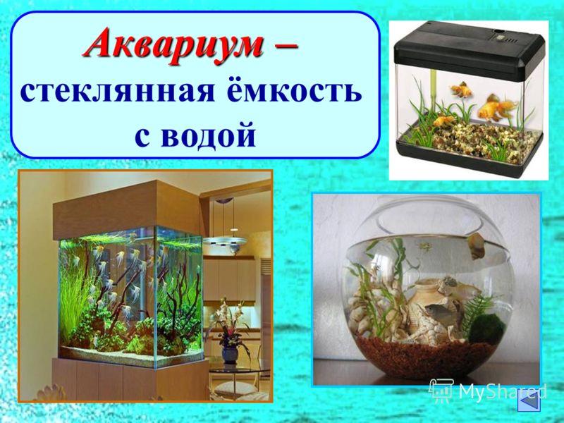 Аквариум – стеклянная ёмкость с водой