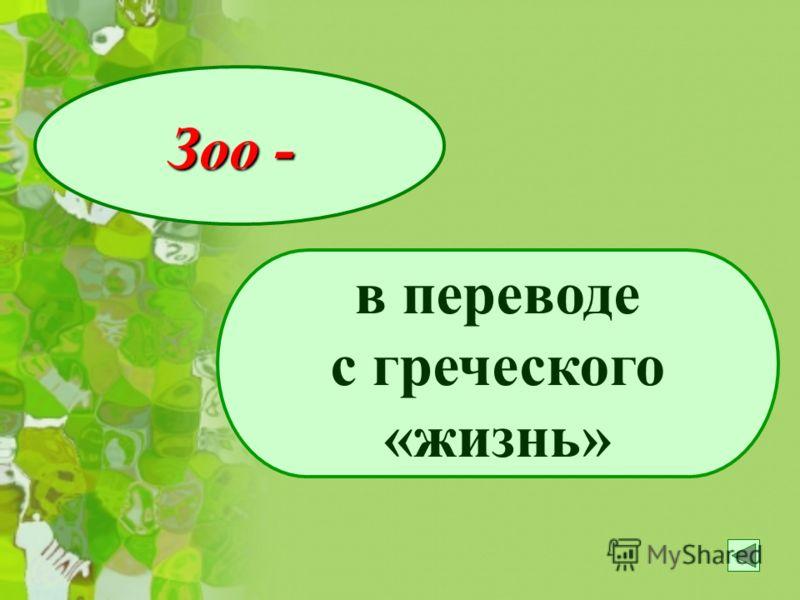 Зоо - в переводе с греческого «жизнь»