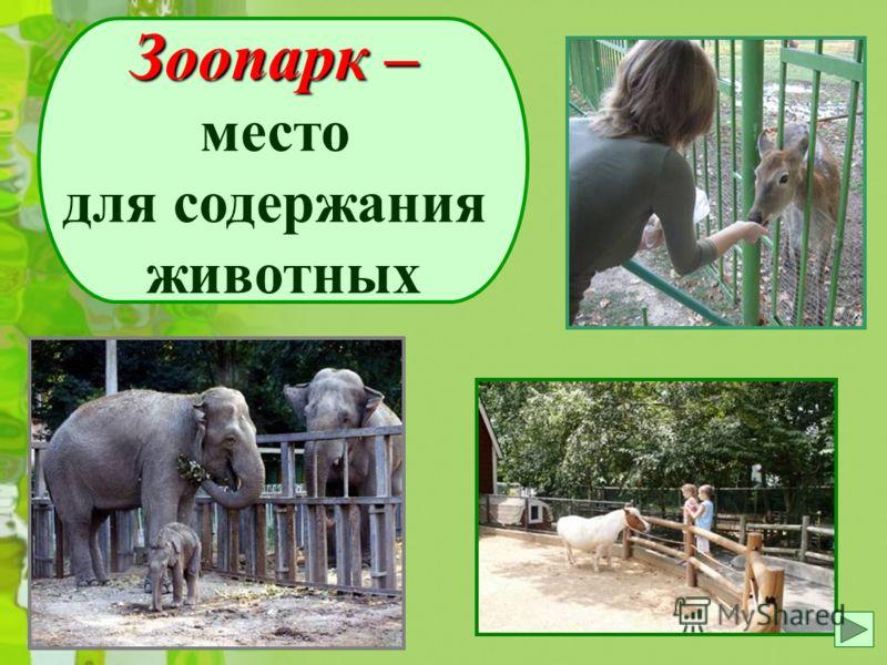 Зоопарк место для содержания