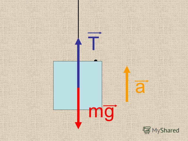 mg T а