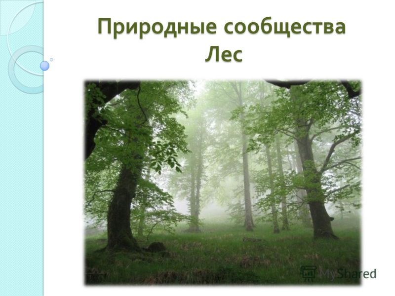 Природные сообщества Лес