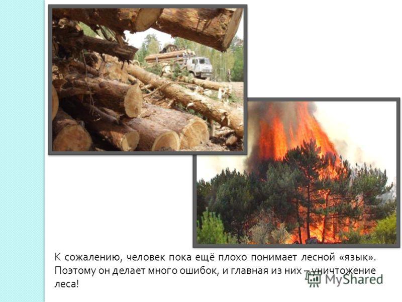 К сожалению, человек пока ещё плохо понимает лесной « язык ». Поэтому он делает много ошибок, и главная из них – уничтожение леса !