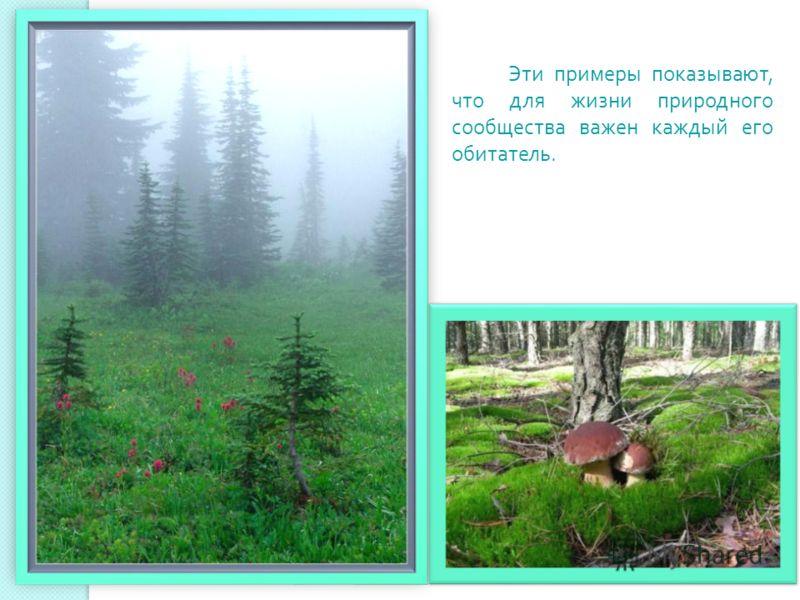 Эти примеры показывают, что для жизни природного сообщества важен каждый его обитатель.