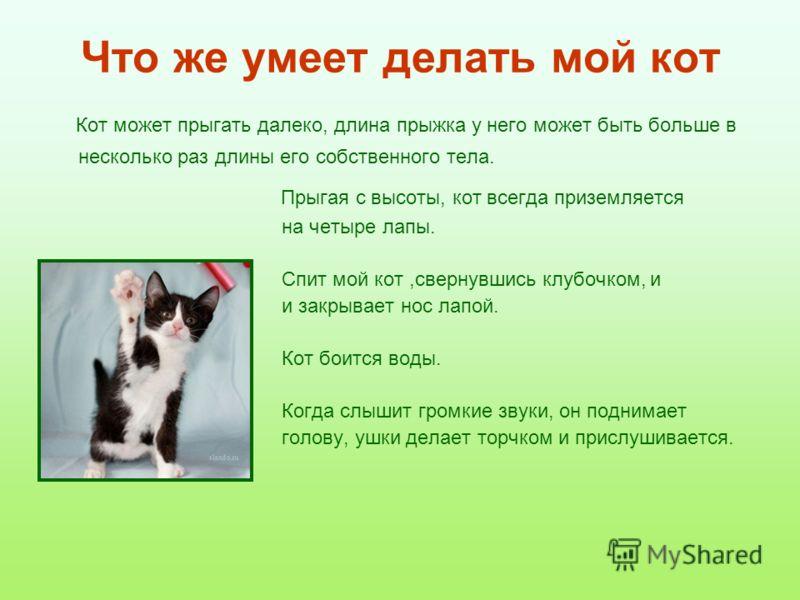 Что же умеет делать мой кот Кот может прыгать далеко, длина прыжка у него может быть больше в несколько раз длины его собственного тела. Прыгая с высоты, кот всегда приземляется на четыре лапы. Спит мой кот,свернувшись клубочком, и и закрывает нос ла