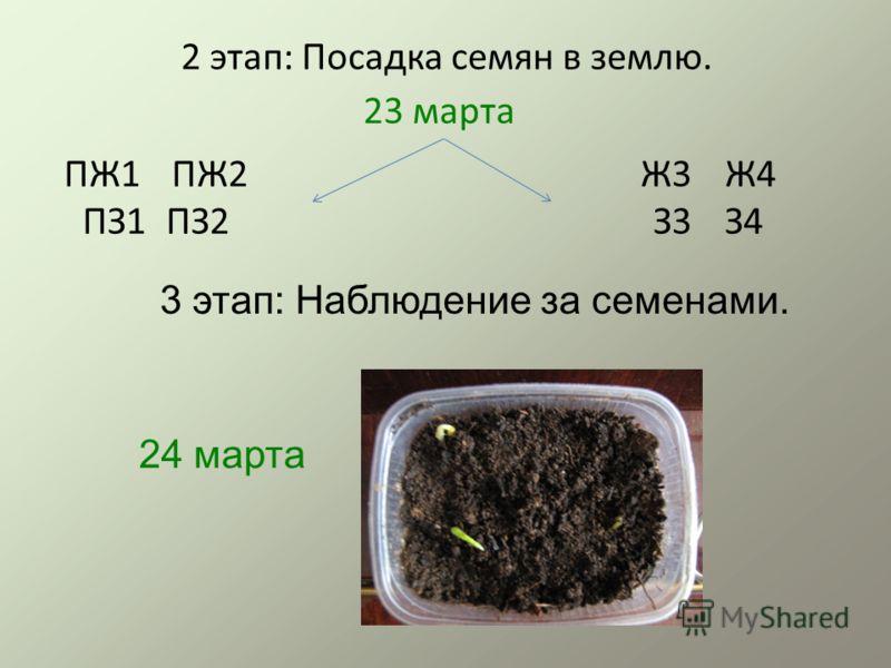 2 этап: Посадка семян в землю. ПЖ1 ПЖ2 ПЗ1 ПЗ2 Ж3 Ж4 З3 З4 23 марта 3 этап: Наблюдение за семенами. 24 марта