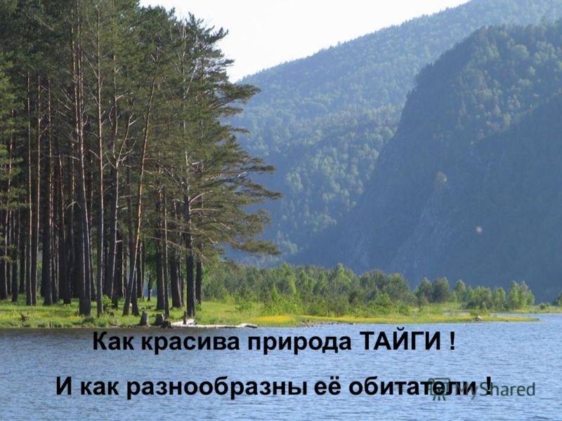 Как красива природа ТАЙГИ ! И как разнообразны её обитатели !