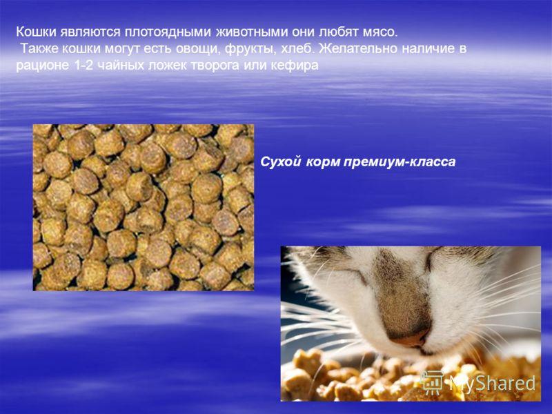 Кошки являются плотоядными животными они любят мясо. Также кошки могут есть овощи, фрукты, хлеб. Желательно наличие в рационе 1-2 чайных ложек творога или кефира Сухой корм премиум-класса