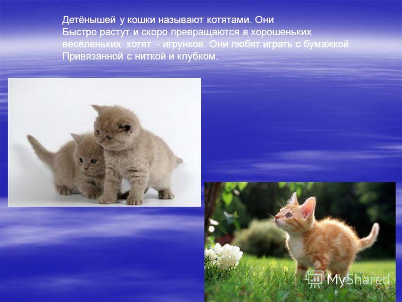 Детёнышей у кошки называют котятами. Они Быстро растут и скоро превращаются в хорошеньких весёленьких котят - игрунков. Они любят играть с бумажкой Привязанной с ниткой и клубком.