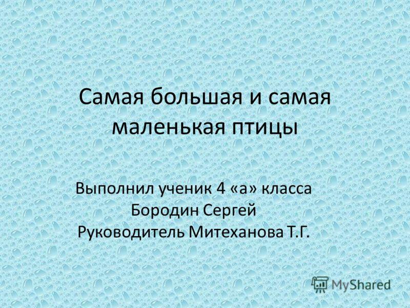 Самая большая и самая маленькая птицы Выполнил ученик 4 «а» класса Бородин Сергей Руководитель Митеханова Т.Г.