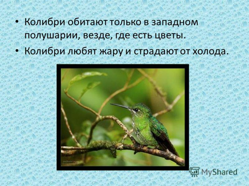 Колибри обитают только в западном полушарии, везде, где есть цветы. Колибри любят жару и страдают от холода.