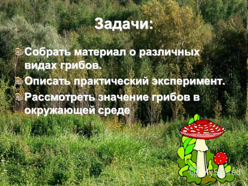 Задачи: Собрать материал о различных видах грибов. Описать практический эксперимент. Рассмотреть значение грибов в окружающей среде