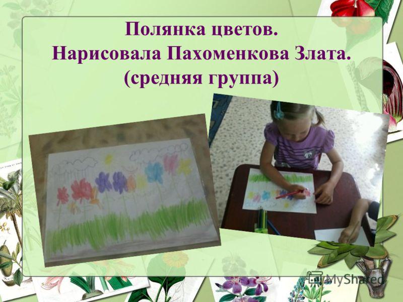 Полянка цветов. Нарисовала Пахоменкова Злата. (средняя группа)