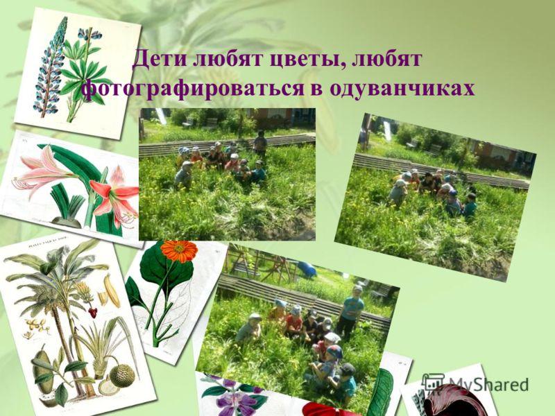 Дети любят цветы, любят фотографироваться в одуванчиках