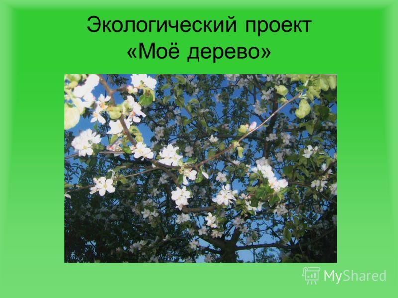 Экологический проект «Моё дерево»