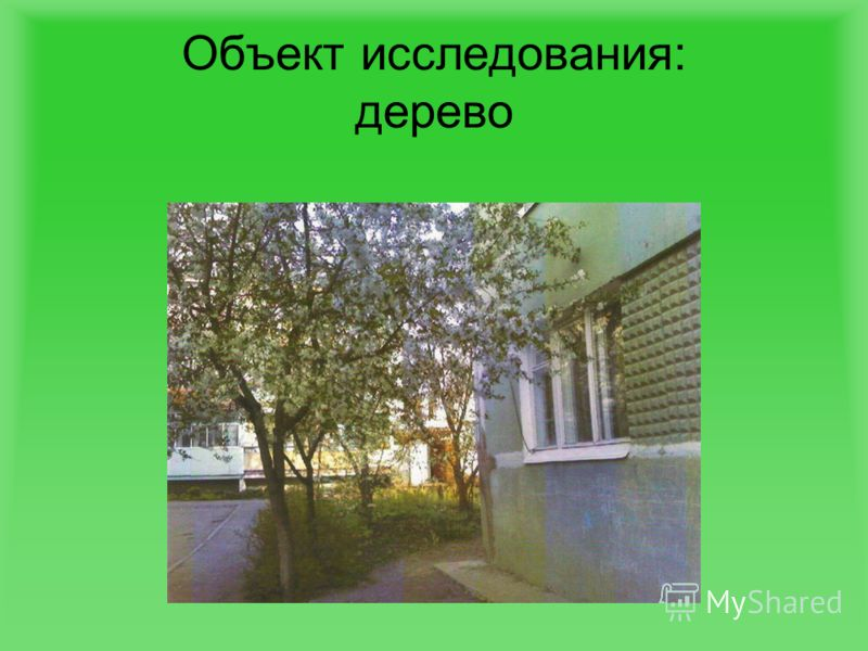 Объект исследования дерево