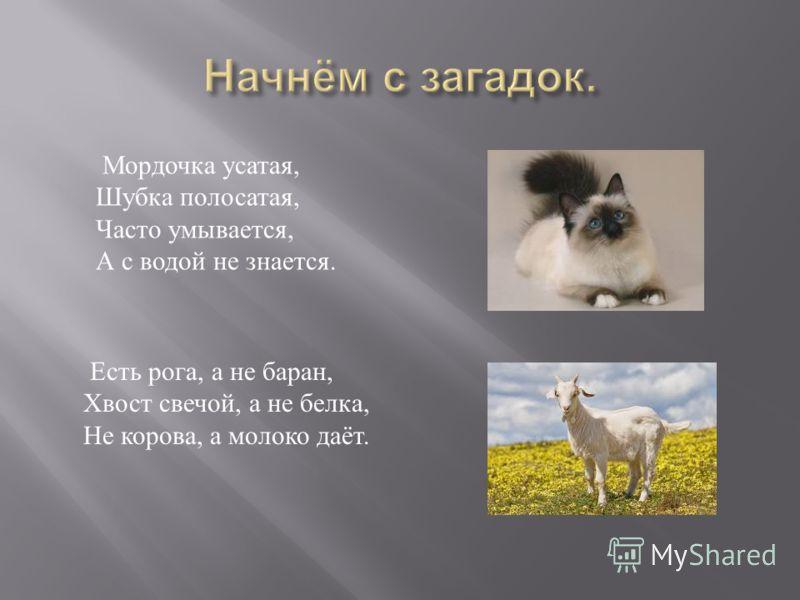 Есть рога, а не баран, Хвост свечой, а не белка, Не корова, а молоко даёт. Мордочка усатая, Шубка полосатая, Часто умывается, А с водой не знается.