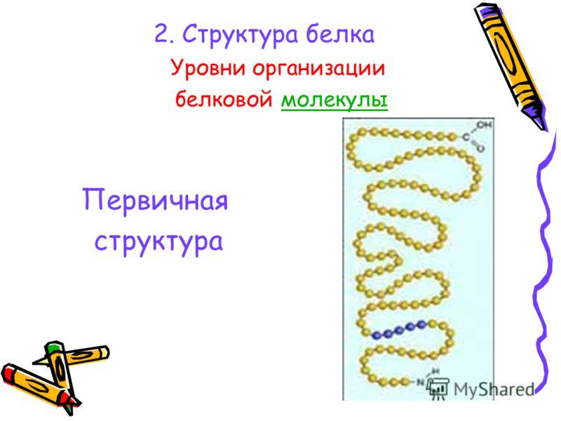 2. Структура белка Уровни организации белковой молекулымолекулы Первичная структура