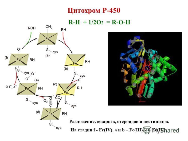Цитохром Р-450 R-H + 1/2O 2 = R-O-H Разложение лекарств, стероидов и пестицидов. На стадии f - Fe(IV), a и b – Fe(III), с – Fe(III)