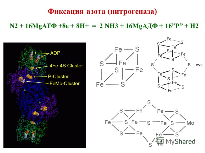 Фиксация азота (нитрогеназа) N2 + 16MgATФ +8e + 8H+ = 2 NH3 + 16MgAДФ + 16P + H2