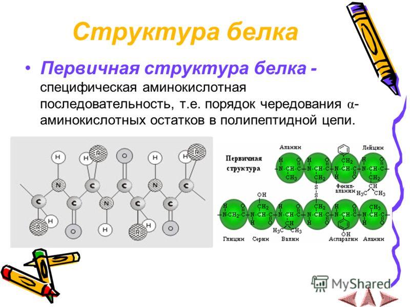 Структура белка Первичная структура белка - специфическая аминокислотная последовательность, т.е. порядок чередования α - аминокислотных остатков в полипептидной цепи.