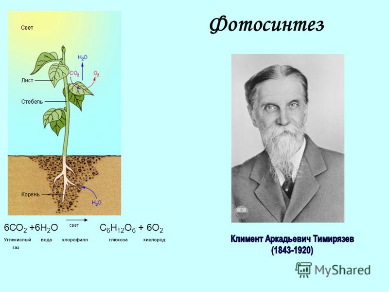 Фотосинтез 6СО 2 +6Н 2 О свет С 6 Н 12 О 6 + 6О 2 Углекислый вода хлорофилл глюкоза кислород газ